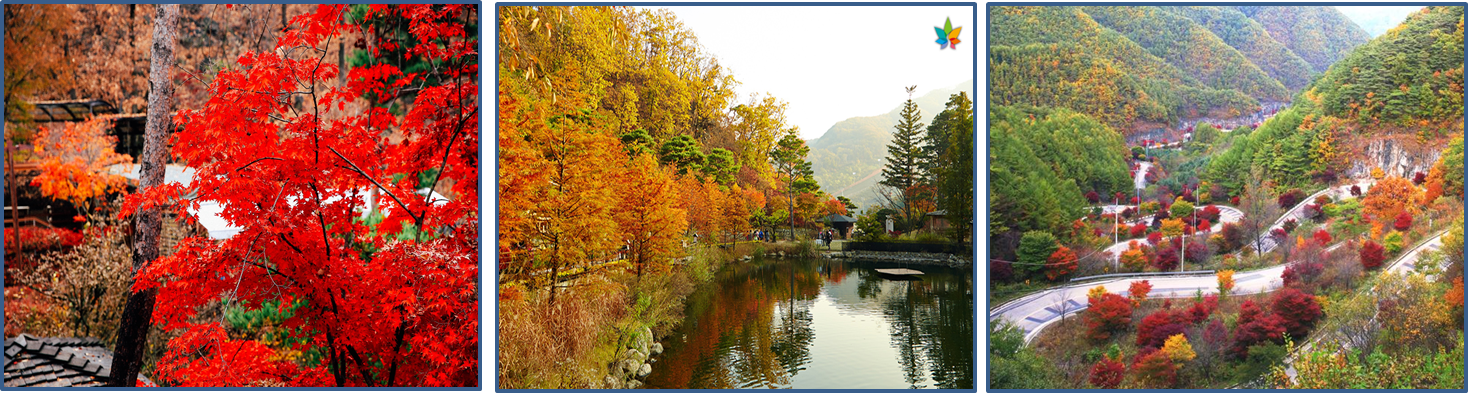 Left: the Hwadam Botanic Garden with red autum leaves. / Middle: the Hwadam Botanic Garden  with yellow autum leaves./ Right: an oepn view of the way to Hwadam Botanic Garden with various colors of autumn leaves.